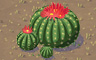 Barrel Cactus Trio Badge - Solitaire Gardens