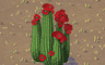 Blooming Cacti Badge - Solitaire Gardens