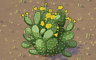 Cactus Bush Badge - Solitaire Gardens