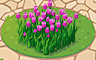 Violet Tulips Badge - Solitaire Gardens