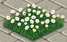 White Daisies Badge - Solitaire Gardens