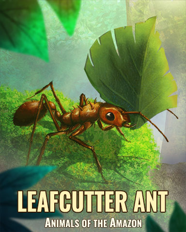 Leaf Cutter Ant Badge - Word Whomp HD