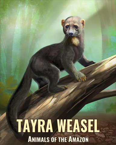 Tayra Weasel Badge - Word Search Daily HD