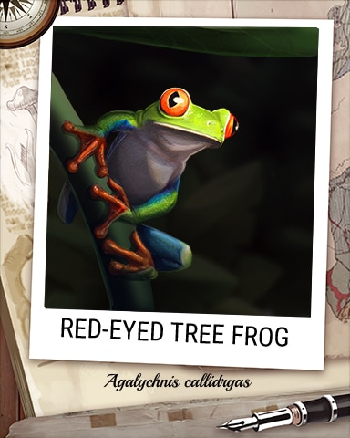Red-Eyed Tree Frog Nocturnal Animal Badge - Solitaire Blitz