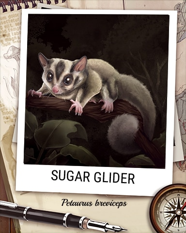 Sugar Glider Nocturnal Animal Badge - Poppit! Party