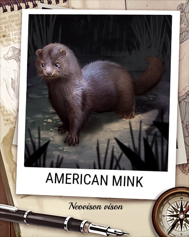 American Mink Nocturnal Animal Badge - Cookie Connect