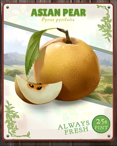 Asian Pear Produce Badge - Sweet Tooth Town