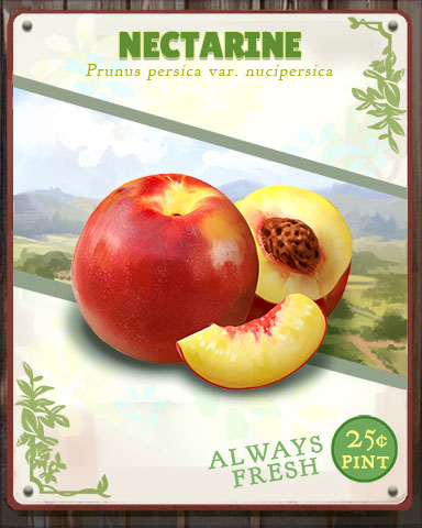 Nectarine Produce Badge - Tumble Bees HD