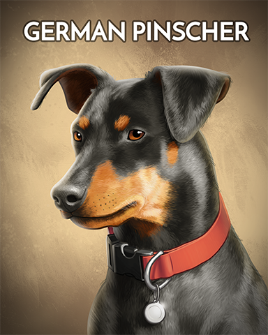German Pinscher Badge - Rainy Day Spider Solitaire HD