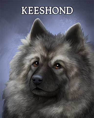 Keeshond Badge - Word Whomp HD