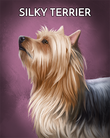 Silky Terrier Badge - StoryQuest