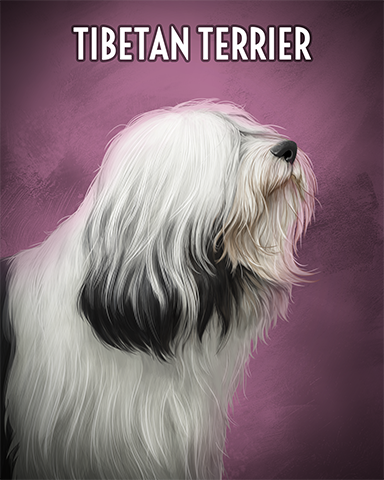 Tibetan Terrier Badge - Jet Set Solitaire