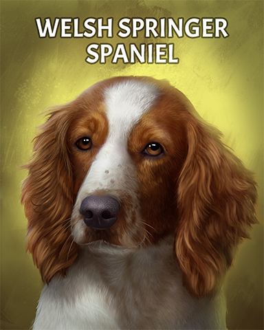 Welsh Springer Spaniel Badge - Phlinx II