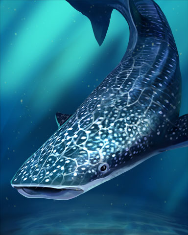 Whale Shark Badge - First Class Solitaire HD