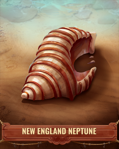 New England Neptune Shell Badge - Word Search Daily HD