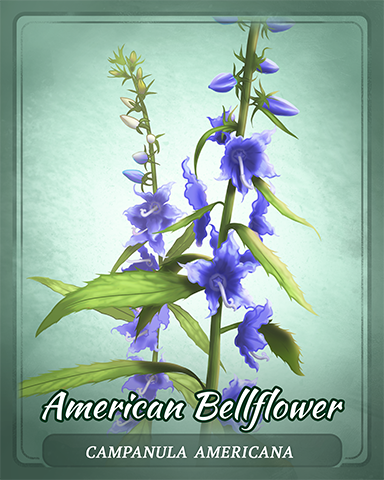 American Bellflower Badge - Quinn's Aquarium