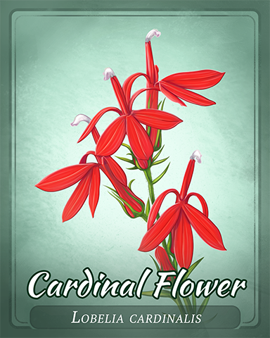 Cardinal Flower Badge - Big City Adventure
