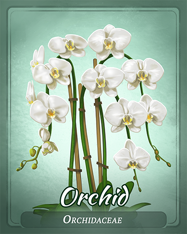 Orchid Badge - Bingo Luau