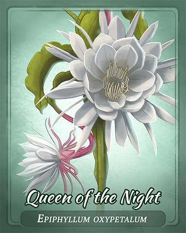 Queen Of The Night Badge - Claire Hart: Secret In The Shadows