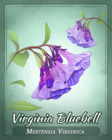 Virginia Bluebell Badge - Aces Up! HD
